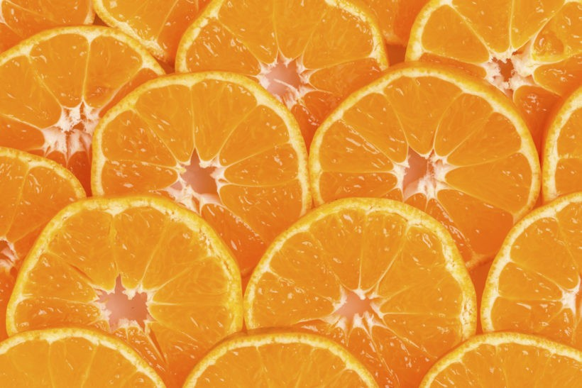 Southwest Florida Citrus Expo Coming in August